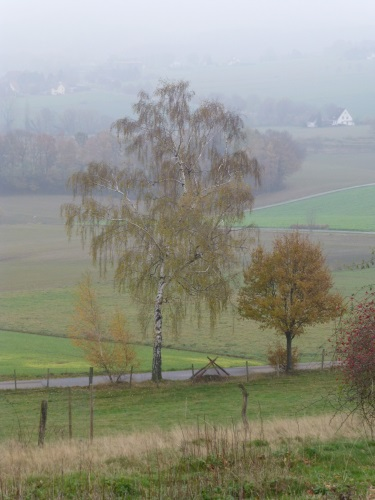 November (151)