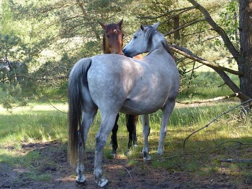 Senner Pferde 189